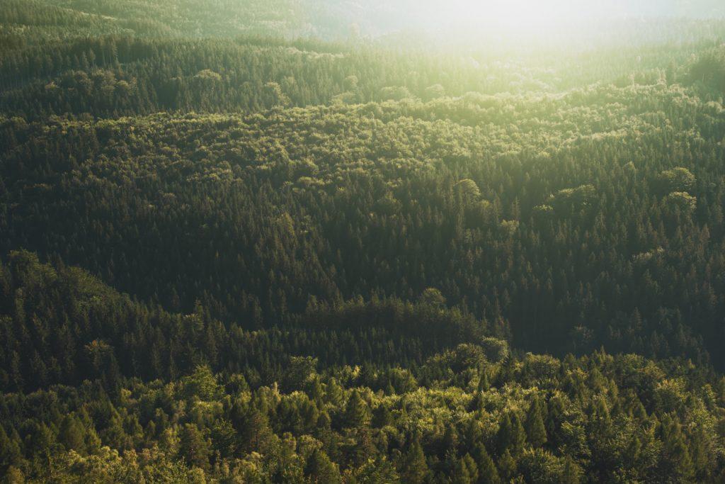 forest_header